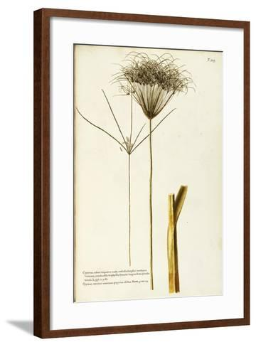 Papyrus Sedge or Paper Reed (Cyperus Papyrus)--Framed Art Print