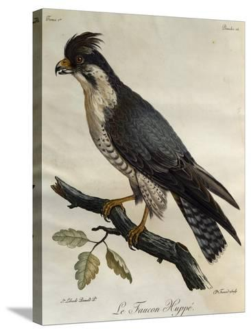 Peregrine Falcon (Falco Peregrinus)--Stretched Canvas Print