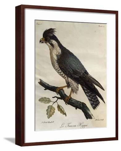 Peregrine Falcon (Falco Peregrinus)--Framed Art Print