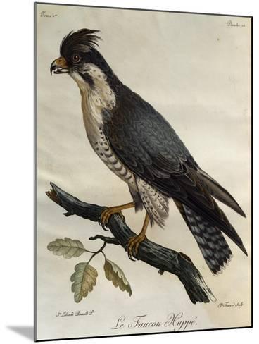 Peregrine Falcon (Falco Peregrinus)--Mounted Giclee Print