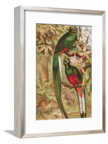 Quetzal--Framed Art Print