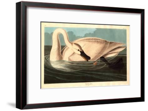 Robert Havell after John James Audubon--Framed Art Print