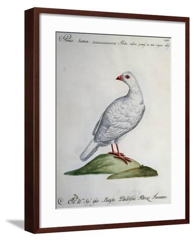 Rock Ptarmigan (Perdix Rubra Pennis in Toto Corpore Albis)--Framed Art Print