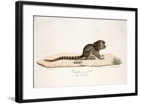 Pygmy Marmoset--Framed Art Print
