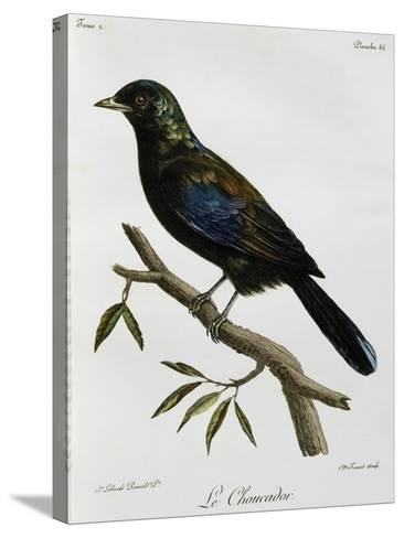 Principe Glossy-Starling (Lamprotornis Ornatus)--Stretched Canvas Print