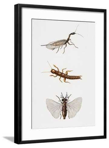 Snakefly (Raphidioptero)--Framed Art Print