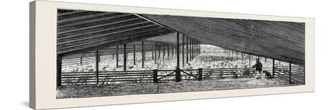 Scene at an Australian Sheep Station--Stretched Canvas Print