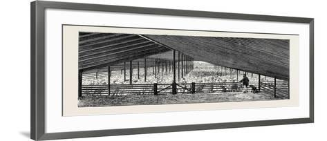Scene at an Australian Sheep Station--Framed Art Print