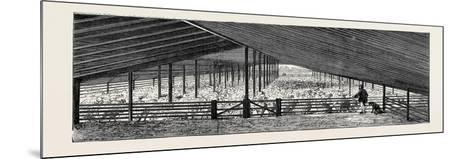 Scene at an Australian Sheep Station--Mounted Giclee Print