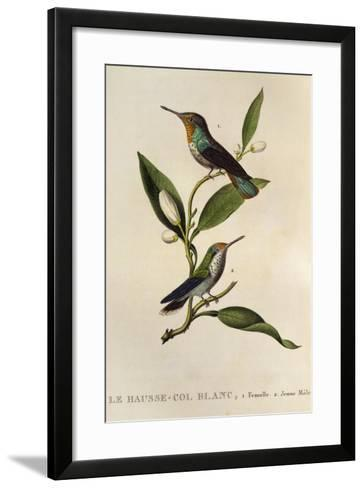 Ruby-Topaz Hummingbird Female and Young Male (Chrysolampis Mosquitus)--Framed Art Print