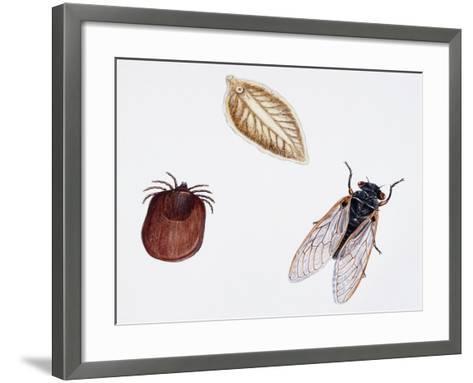 Sheep Tick (Ixodes Ricinus) Ixodidae--Framed Art Print