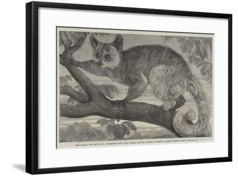 The Galago--Framed Art Print