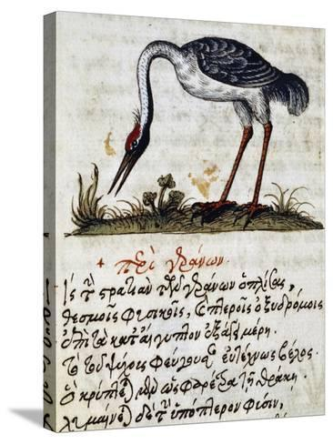 Treatise on Stork--Stretched Canvas Print