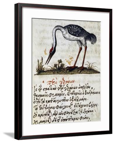 Treatise on Stork--Framed Art Print