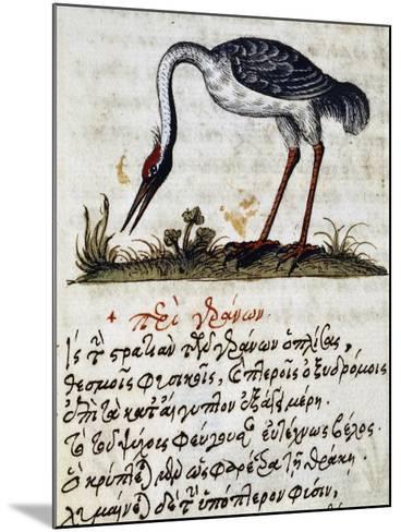 Treatise on Stork--Mounted Giclee Print