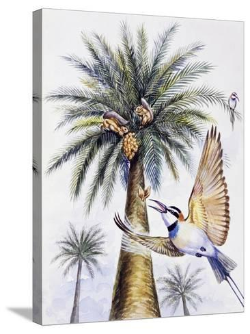 White-Throated Bee-Eater (Merops Albicollis)--Stretched Canvas Print