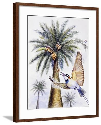 White-Throated Bee-Eater (Merops Albicollis)--Framed Art Print
