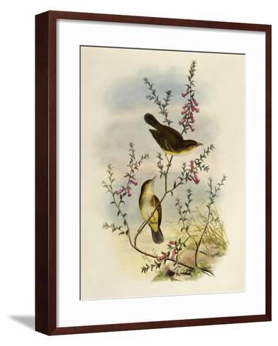 White Spotted Flycatcher (Pseudogerygone Notata)--Framed Art Print