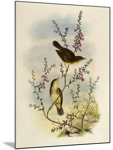 White Spotted Flycatcher (Pseudogerygone Notata)--Mounted Giclee Print