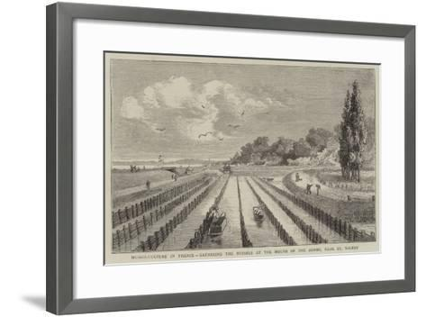 Mussel-Culture in France, Gathering the Mussels at the Mouth of the Somme, Near St Valery--Framed Art Print