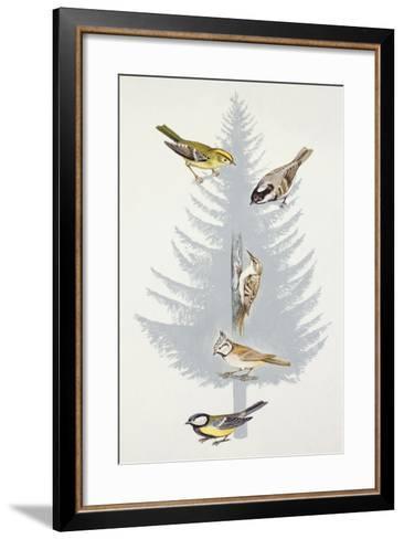 Zoology: Birds--Framed Art Print