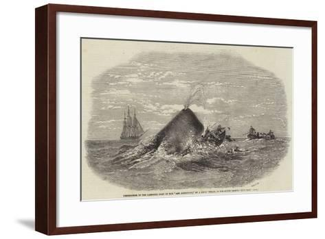 Destruction of the Larboard Boat of the Ann Alexander, by a Sperm Whale, in the South Pacific--Framed Art Print