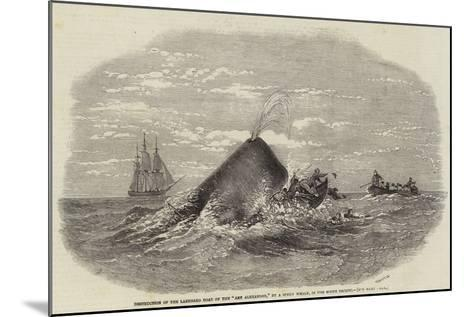 Destruction of the Larboard Boat of the Ann Alexander, by a Sperm Whale, in the South Pacific--Mounted Giclee Print