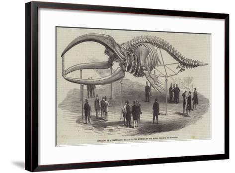 Skeleton of a Greenland Whale in the Museum of the Royal College of Surgeons--Framed Art Print