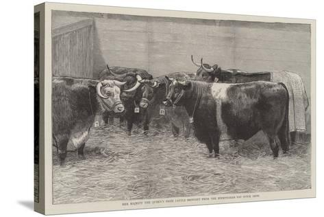 Her Majesty the Queen's Prize Cattle Brought from the Birmingham Fat Stock Show--Stretched Canvas Print