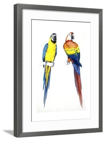 Birds: Psittaciformes, Blue-And-Yellow Macaw (Ara Ararauna) and Scarlet Macaw (Ara Macao)--Framed Art Print