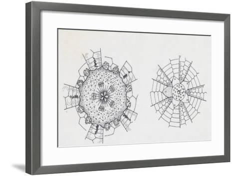 Mouth and Anal Openings of Female Purple Sea Urchin (Paracentrotus Lividus), Echinoderms--Framed Art Print