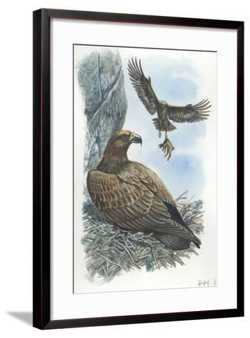 Couple of Golden Eagles Aquila Chrysaetos Female Warms Eggs While Male Brings Her Hare--Framed Art Print