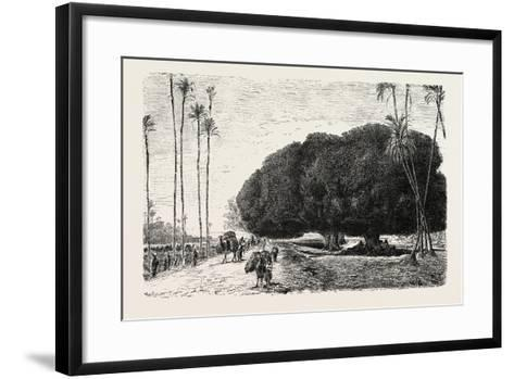 Palm and Sycamore, Thinnest and Thickest of the Trees of the Nile Valley. Egypt, 1879--Framed Art Print