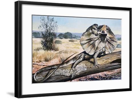 Frilled-Neck Lizard or Frilled Dragon (Chlamydosaurus Kingii), Agamidae--Framed Art Print
