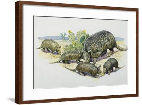 Female and Pups of Nine-Banded Armadillo (Dasypus Novemcinctus), Dasypodidae--Framed Art Print