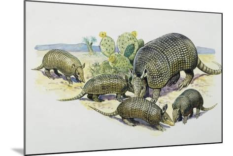 Female and Pups of Nine-Banded Armadillo (Dasypus Novemcinctus), Dasypodidae--Mounted Giclee Print
