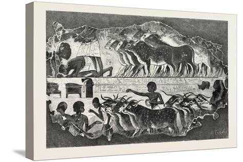 Herd of Cattle Brought before their Owner,From an Egyptian Tomb, Egypt, 1879--Stretched Canvas Print