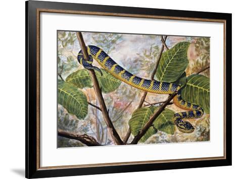 Wagler's Pit Viper or Temple Viper (Trimeresurus Wagleri), Viperidae--Framed Art Print