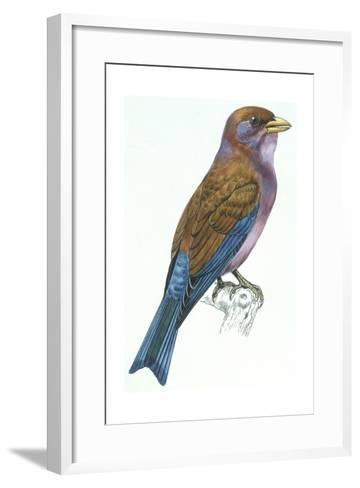 Birds: Coraciiformes, Racket-Tailed Roller (Coracias Spatulatus)--Framed Art Print