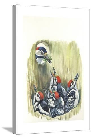 Great Spotted Woodpecker Dendrocopos Major While Carrying Food to Young in Nest--Stretched Canvas Print