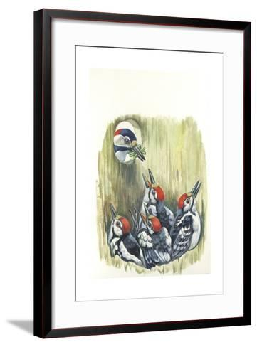 Great Spotted Woodpecker Dendrocopos Major While Carrying Food to Young in Nest--Framed Art Print