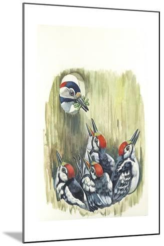 Great Spotted Woodpecker Dendrocopos Major While Carrying Food to Young in Nest--Mounted Giclee Print