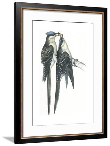 Birds: Cuculiformes, Great Spotted Cuckoos, (Clamator Glandarius) Mating--Framed Art Print