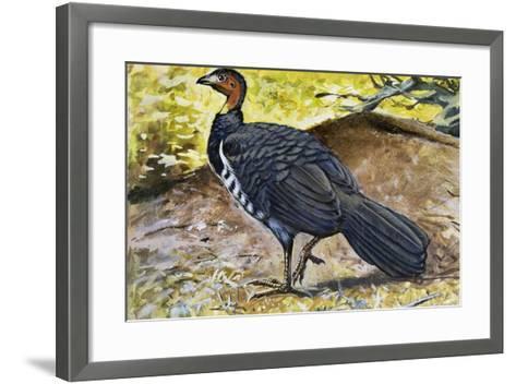 Australian Brushturkey or Scrub Turkey (Alectura Lathami), Megapodiidae--Framed Art Print