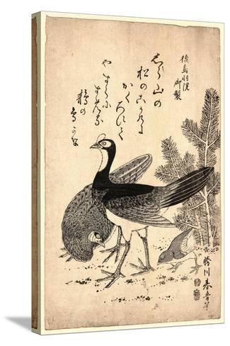 Komatsu Ni Yamadori, Wildfowl and Pine. Print Shows Wild Birds and a Young Pine Tree--Stretched Canvas Print