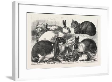 The Cat, Rabbit, and Guinea-Pig Show at the Alexandra Palace, 1876, Uk--Framed Art Print