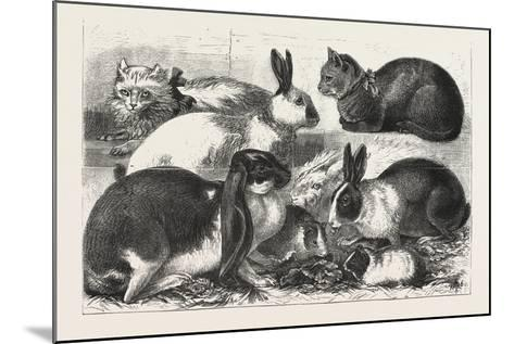 The Cat, Rabbit, and Guinea-Pig Show at the Alexandra Palace, 1876, Uk--Mounted Giclee Print
