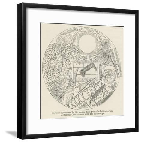 Infusoria Procured by Sir James Ross from the Bottom of the Antarctic Ocean--Framed Art Print