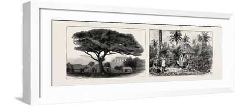 A Large Tree at Nukualofa, Tonga Islands (Left); a Tongan Village, Vavau, Tonga Islands (Right)--Framed Art Print