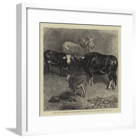 Notes at the Zoological Gardens, Brahmin Bull, Gayal Cow, and Hybrid Heifer and Calf--Framed Art Print